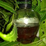 Home made oil for ring worms(padar thamarai in tamil)